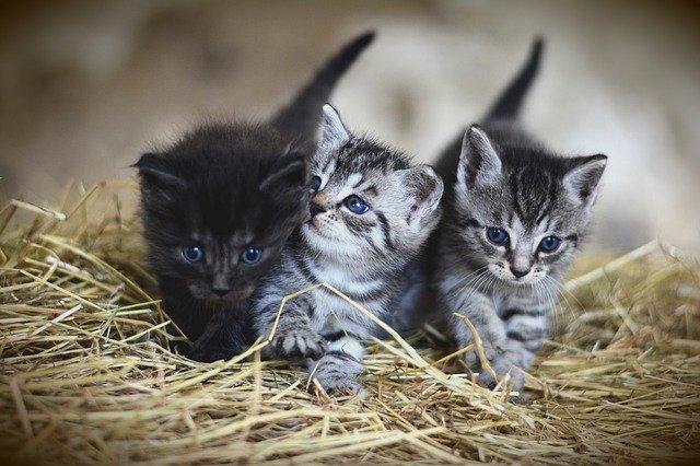 Tři koťátka