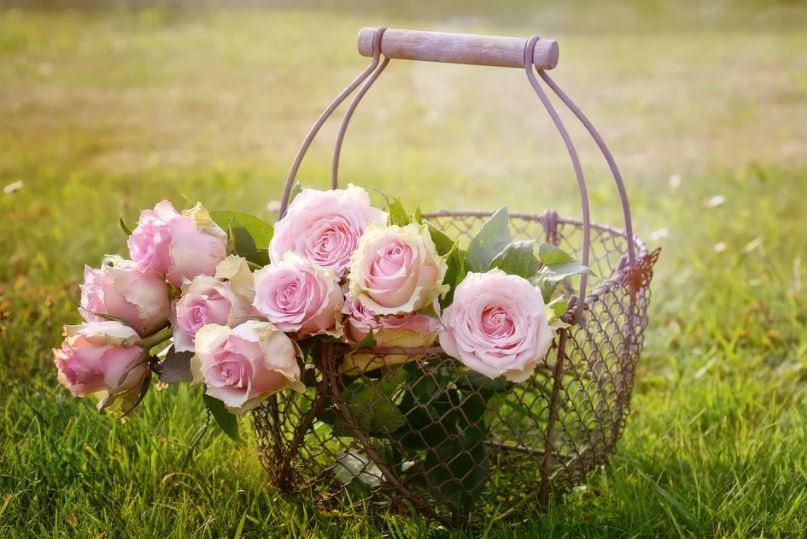 růže na zahradě